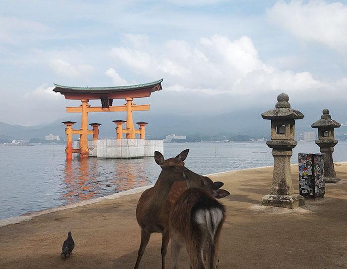 Isola di Miyajima, escursione da Hiroshima